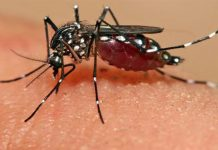 Remedy For Dengue Fever
