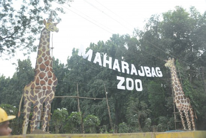 Maharajbag zoo नागपूर